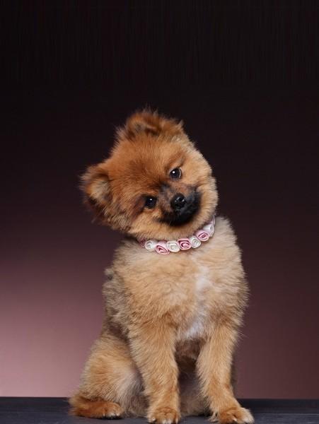Halsband für den Hund - das perfekte Accessoires für Ihren Hund beil der Hochzeit.