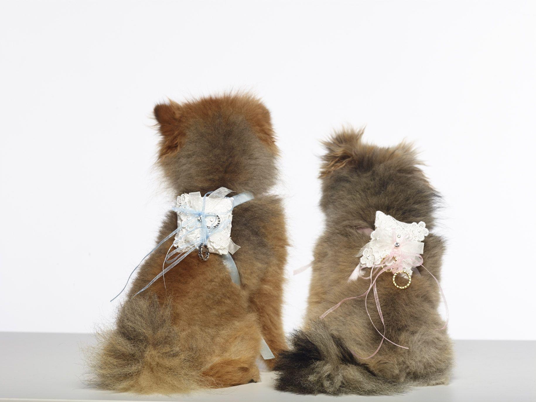 Ringkissen-fur-den-Hund