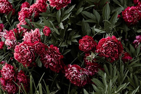 wildblumen-vorschau